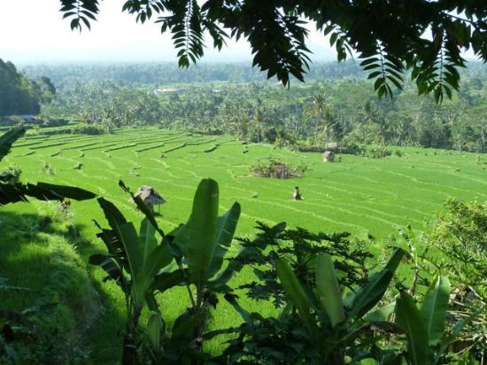 Bali Entdecken: Die schönsten Aussichten auf Reisfelder