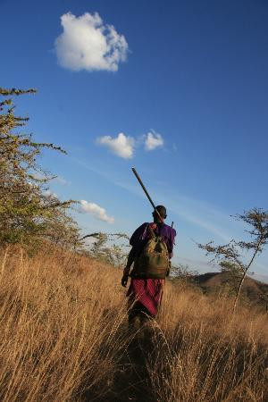 Campi ya Kanzi: Walking safari