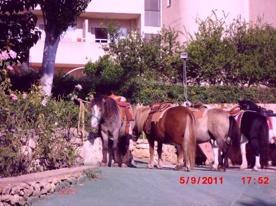 Club Cala Romani: paseo en poni
