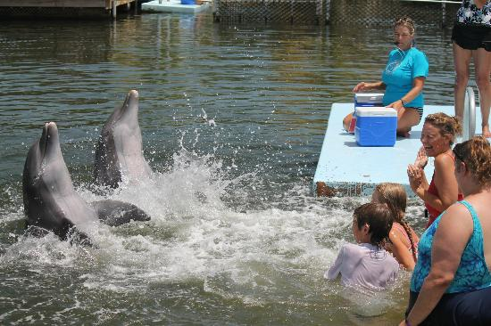 "Grassy Key, FL: Soaking up the fun, ""Dolphin-style"""