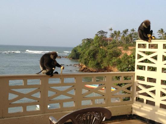 Bay Beach Hotel: Monkeys!