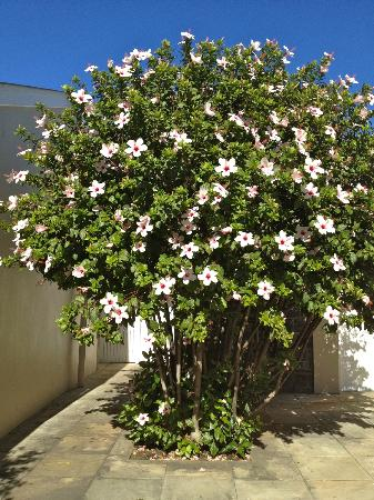 Dock House Boutique Hotel: More pretty shrubs