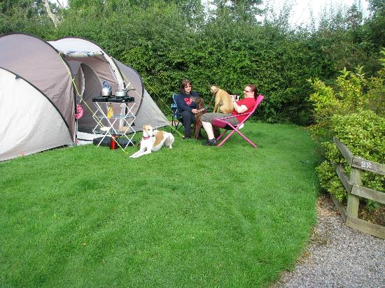 Old Oaks Touring Park and Glamping: Typical pitch