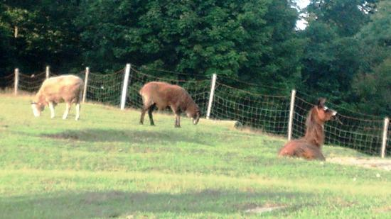 Maple Hill Farm Inn and Conference Center: Farm animals
