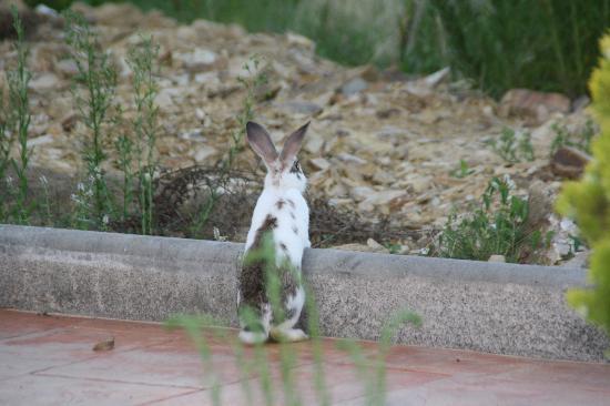 Frantxilla Rural: El amiguito de mi hija