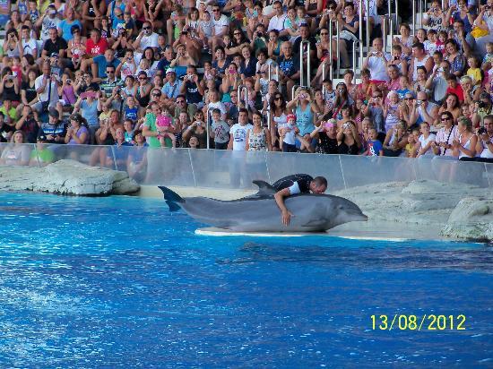 Oltremare : Lo spettacolo dei Delfini.