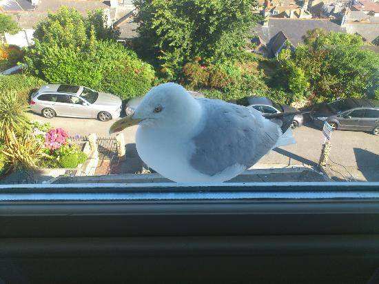 Eleven Sea View Terrace: Suite no. 2 - Jacob, our seagull