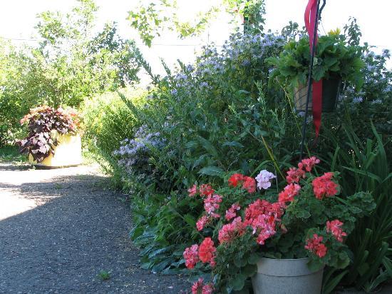 Bayview Motel: Big flowers