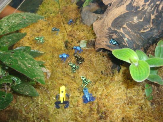 Tropical Frogs Picture Of The Maritime Aquarium Norwalk