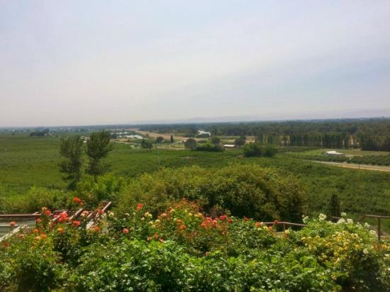 Windy Point Vineyards: view