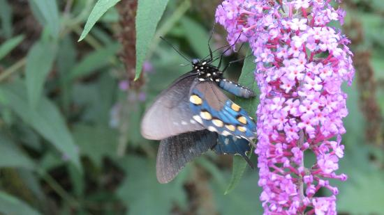 Jonathan Creek Inn and Villas: Butterfly Garden