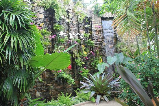 Orchid Conservatory Picture Of Daniel Stowe Botanical Garden Belmont Tripadvisor