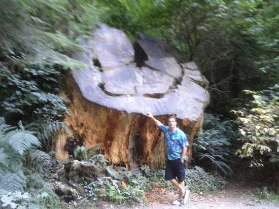 Redwood National Park, Καλιφόρνια: nice tree trunk!