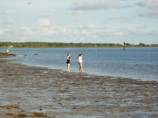 Perry Fl Wading In Gulf Waters At Keaton Beach
