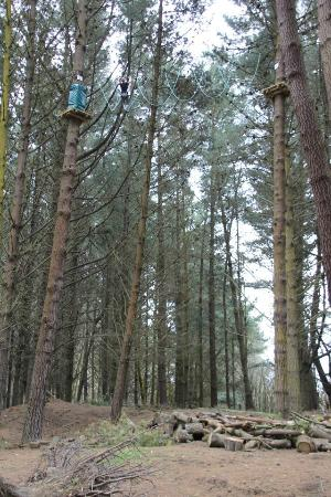 Adrenaline Forest: Up in the trees