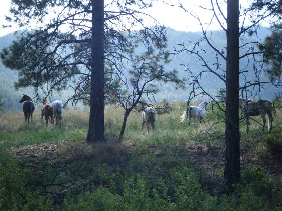 Wildhorse Mountain Guest Ranch: The beautiful horses!!!
