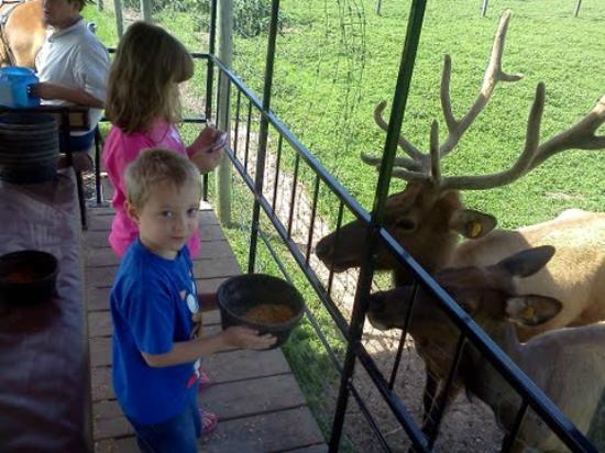 Dutch Creek Farm Animal Park: Look at that rack!