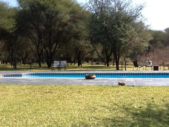 Drotsky's Cabins: swimming pool at Drotsky's