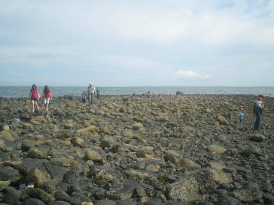 Blackhead Path: Searching for Rockpools at the Wren's Eggs - rich in sea life (blood suckers, crabs etc.)