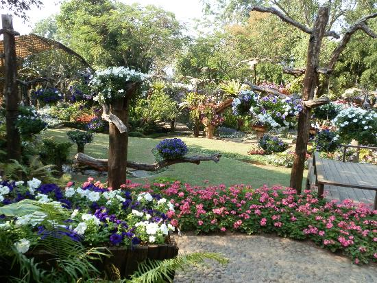 Mae Fa Luang, Tajlandia: Flower display winter festival