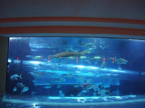 Do Golden Nugget Shark Tank Tours Book Up