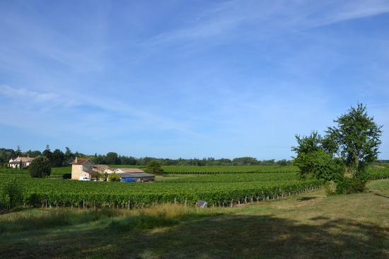 Clos de la Barbanne: vineyard