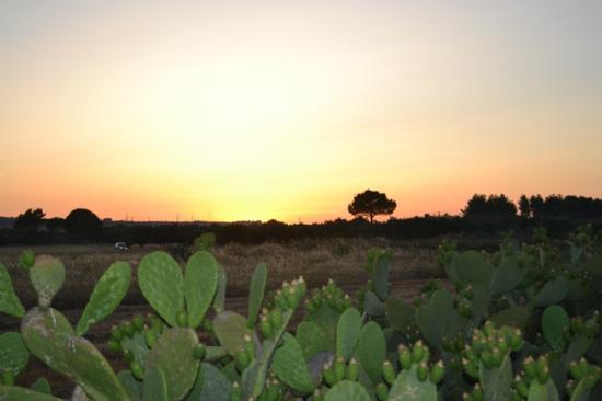 Azienda Agrituristica Matine: Tramonto dal Matine