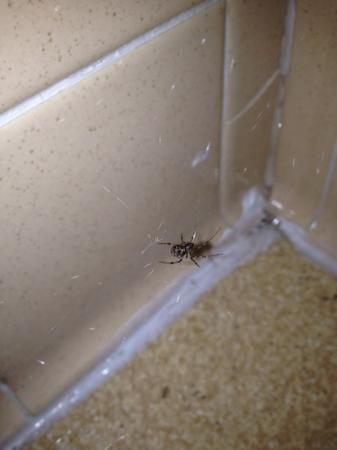 Northside Motel: Spider Live!!!! In bathroom!