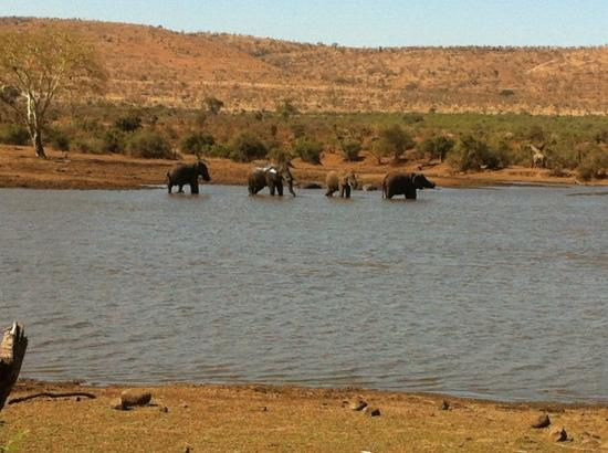 Shishangeni Private Lodge: Camp Shawu - view of elephant from room