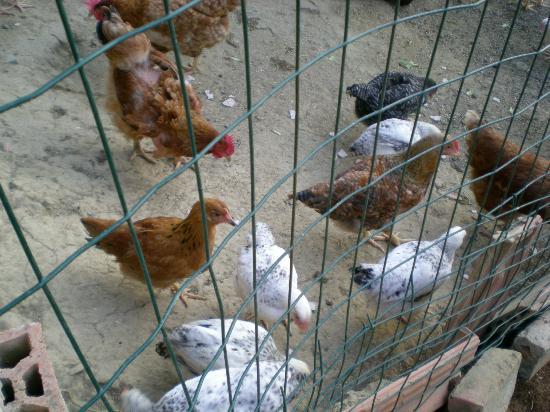 Garden House: pollaio
