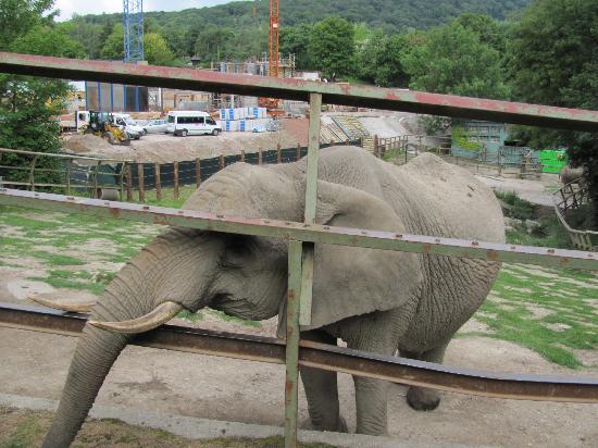 Kronberg im Taunus, Tyskland: Elefant
