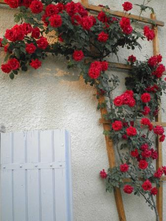 La Maison Ancienne: Roses over the shutters at front of the house