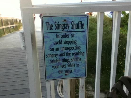DiamondHead Beach Resort & Spa: StingRay Shuffle