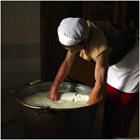 Sapori e Saperi takes you to make pecorino cheese