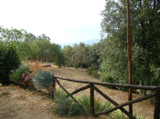 Podere Leccetro: vue sur le jardin