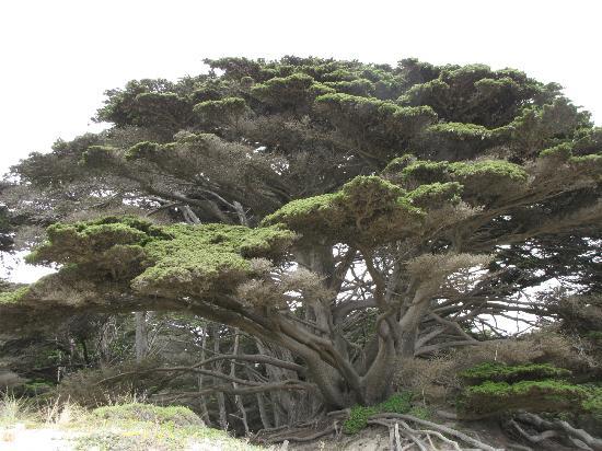 Plaża Pfeiffer Big State: Amazing trees!