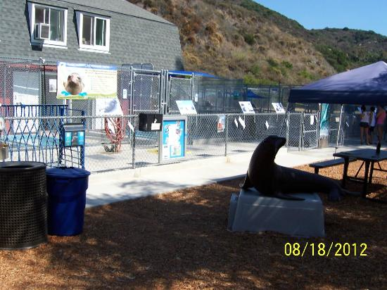 Pacific Marine Mammal Center: Exterior Pools