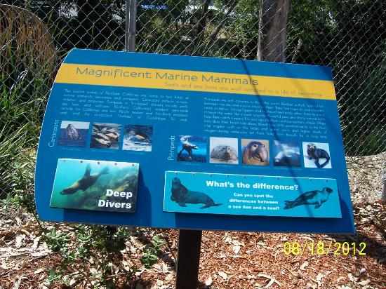 Pacific Marine Mammal Center: Educational Board