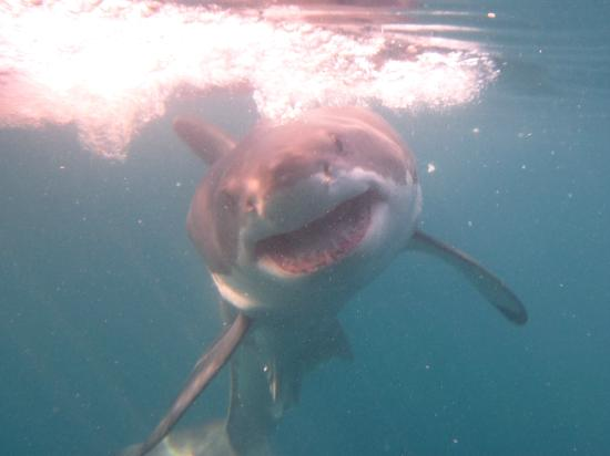 Gansbaai, South Africa: Amazing shark experience!