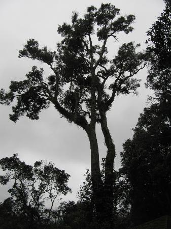 The Tall Trees Munnar: Tall trees were amazing
