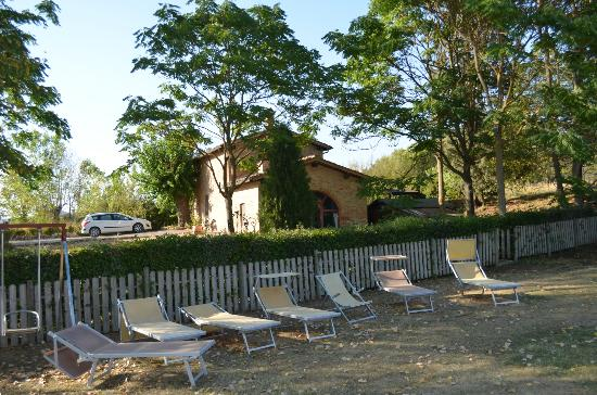 Agriturismo San Fabiano : Lots of room to lounge next to the pool