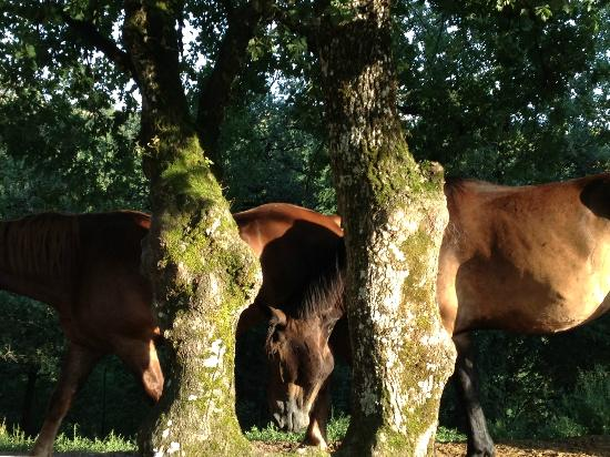French Riding Holidays: Horses grazing in one of the paddocks