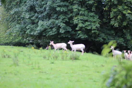 Rivervale Lodge: Queen Elizabeth I's white deer