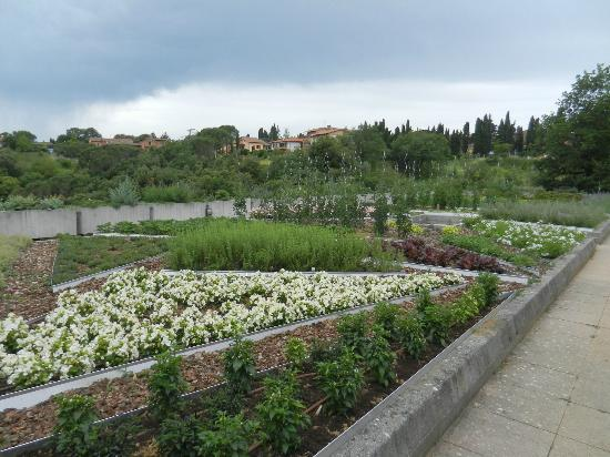 Hotel Terre di Casole: The hotels garden on the dining terrace