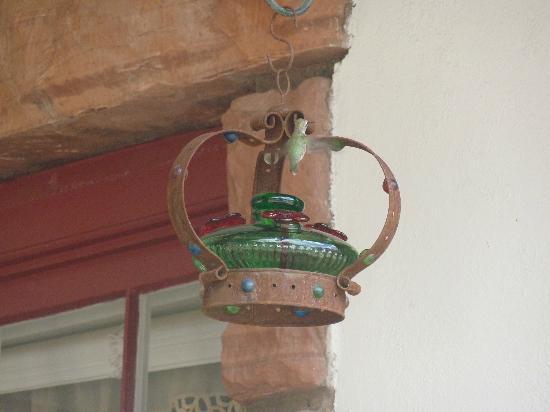 Under The Eaves: Hummingbird in the garden