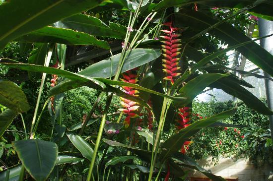 Cap Au Vert: Fleur de la serre