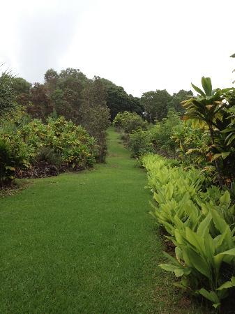 夏威夷热带植物园