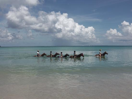 Being with Horses: All the family swimming in Buccoo Bay