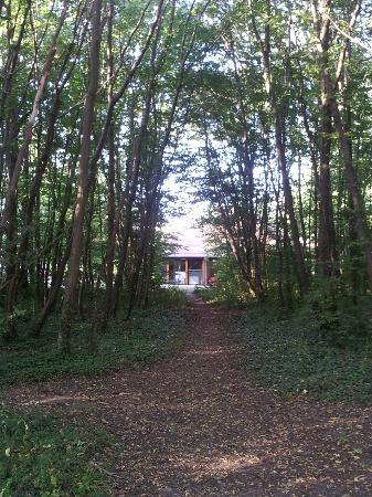 Novotel Fontainebleau Ury : Vue de l'hôtel depuis la forêt