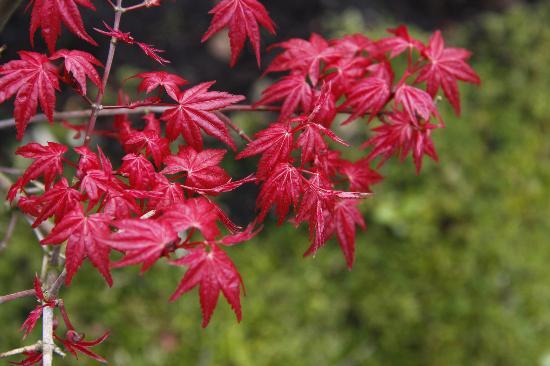 Keukenhof : en el jardín chino